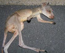 Fecal contamination on kangaroo carcess in a petfood factory.